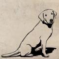 Samolepka na zeď Labrador 003 (146960) - 1