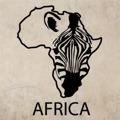 Samolepka na zeď Zebra 009 (146768) - 1