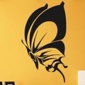 Samolepka na zeď Motýl 017 (146387) - 1